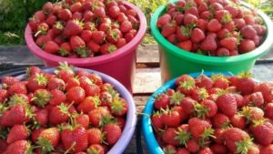 Сан Андреас дает большой урожай