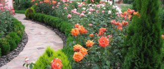 Цветы в доль забора