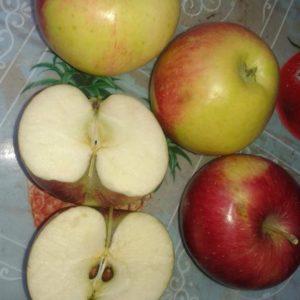 Плоды яблони Уэлси